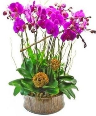 Ahşap kütükte lila mor orkide 8 li  Adıyaman internetten çiçek satışı