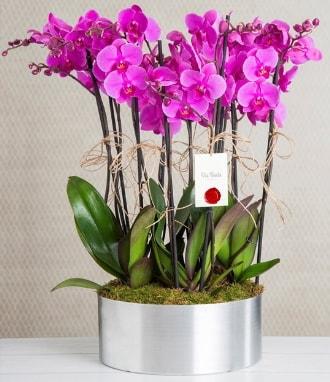 11 dallı mor orkide metal vazoda  Adıyaman çiçek gönderme sitemiz güvenlidir