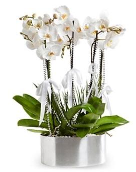 Beş dallı metal saksıda beyaz orkide  Adıyaman çiçek yolla