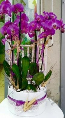 Seramik vazoda 4 dallı mor lila orkide  Adıyaman online çiçek gönderme sipariş