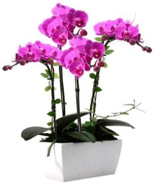 Seramik vazo içerisinde 4 dallı mor orkide  Adıyaman çiçek satışı
