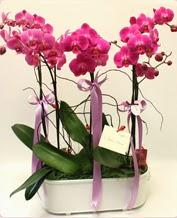 Beyaz seramik içerisinde 4 dallı orkide  Adıyaman ucuz çiçek gönder