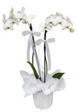 2 dallı beyaz orkide  Adıyaman güvenli kaliteli hızlı çiçek