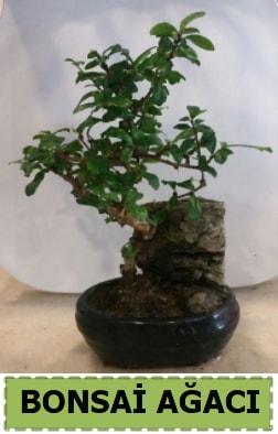 Bonsai ağacı japon ağacı satışı  Adıyaman hediye çiçek yolla