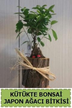 Kütük içerisinde doğal bonsai ağacı  Adıyaman çiçekçi telefonları