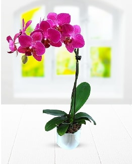 Tek dallı mor orkide  Adıyaman çiçek satışı