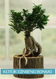 Kütük ağaç içerisinde ginseng bonsai  Adıyaman çiçek gönderme sitemiz güvenlidir