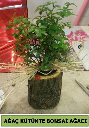Doğal ağaç kütük içerisinde bonsai ağacı  Adıyaman çiçek gönderme sitemiz güvenlidir