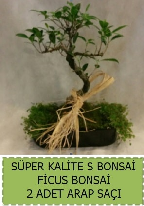 Ficus S Bonsai ve arap saçı  Adıyaman çiçekçi telefonları