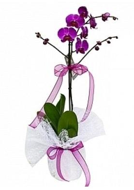 Tekli Mor Orkide  Adıyaman çiçek yolla