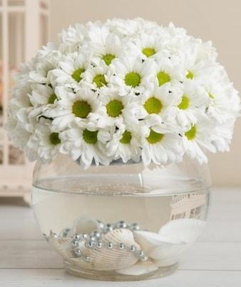 Fanusta beyaz Papatya  Adıyaman çiçek satışı