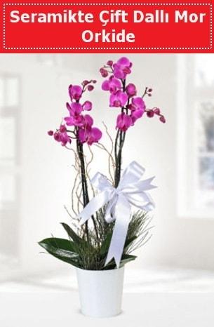 Seramikte Çift Dallı Mor Orkide  Adıyaman anneler günü çiçek yolla