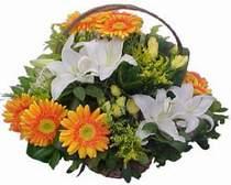 Adıyaman online çiçekçi , çiçek siparişi  sepet modeli Gerbera kazablanka sepet